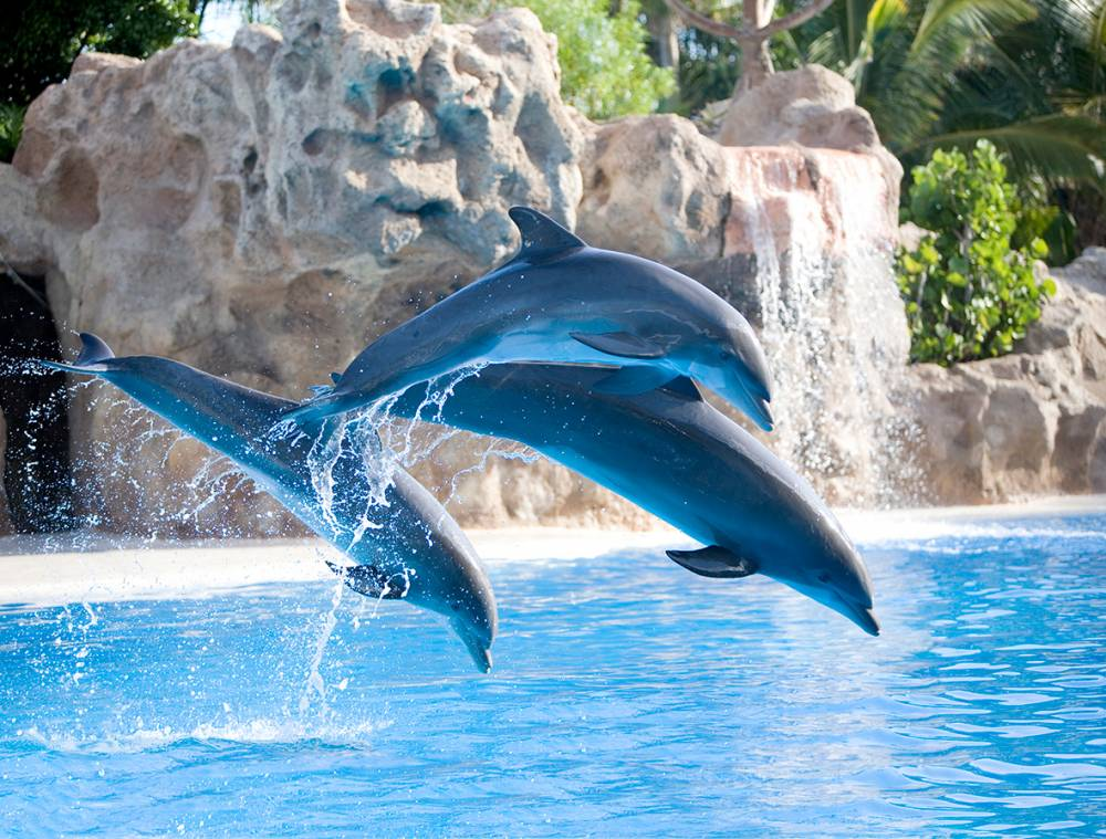 Bus Tour Excursions Gran Canaria Tenerife and Loro Parque